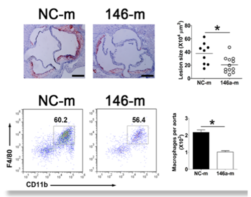 In Vivo Delivery Of Mir 146A